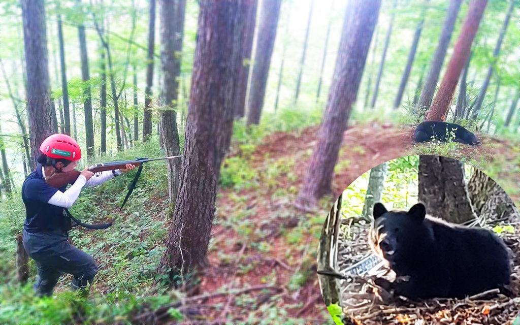 野生鳥獣の出没、麻酔銃を使用した捕獲、ツキノワグマ、ニホンカモシカ、ニホンザルなど